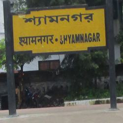 astrologer in shyamnagar